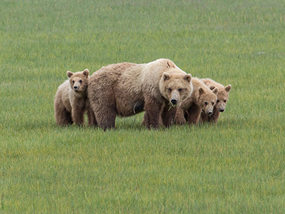 Kodiak Island Bear Viewing