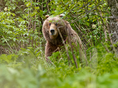 Kodiak Bear Treks