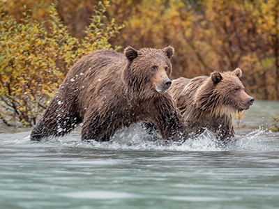Lake Clark Bear Tour