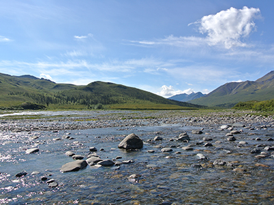 Yukon Coast Mountain Trek